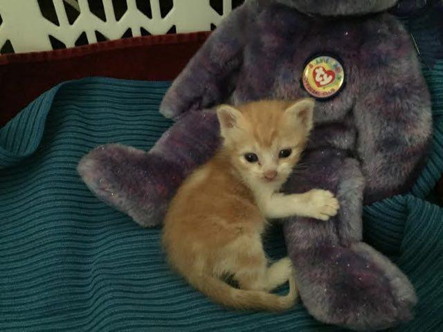 ヌイグルミに抱きつく子猫
