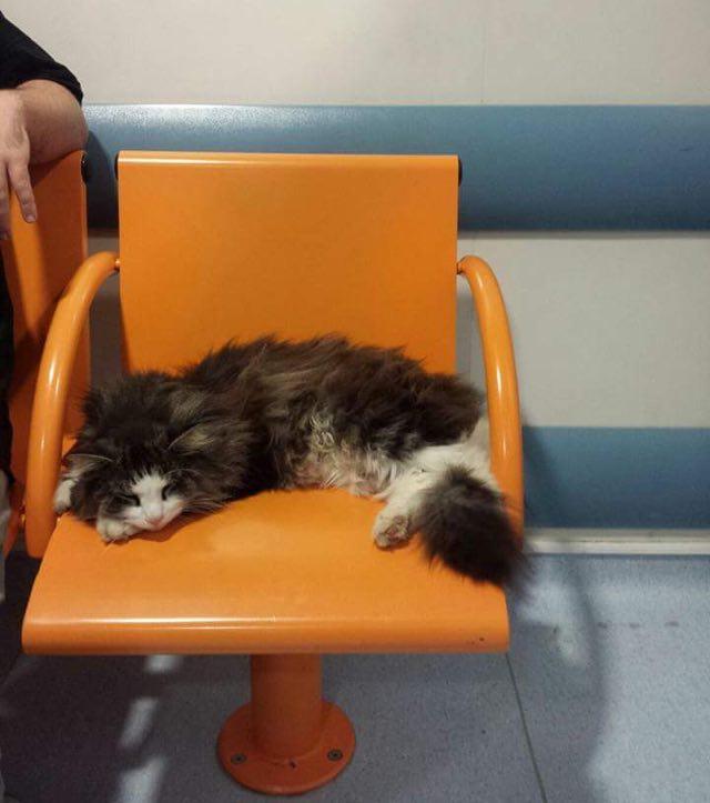 待合室で休む猫
