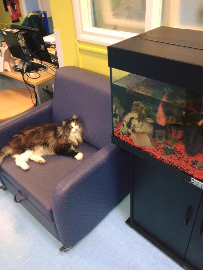 待合室でくつろぐ猫