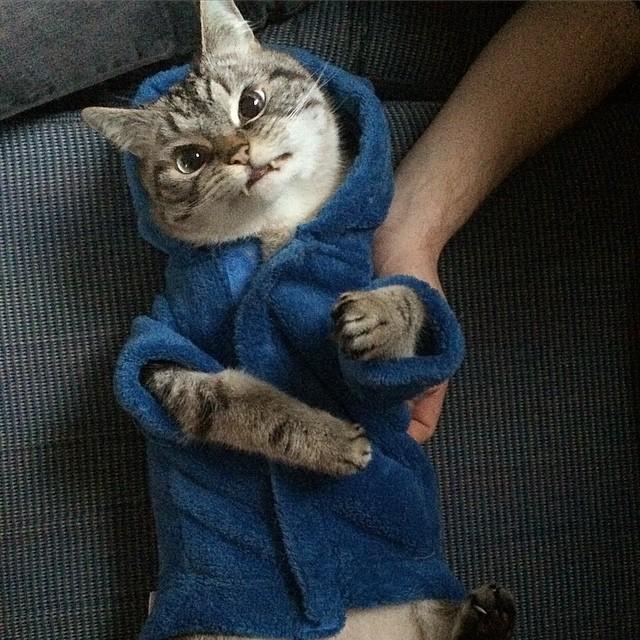 洋服を着る牙のある猫ロキ