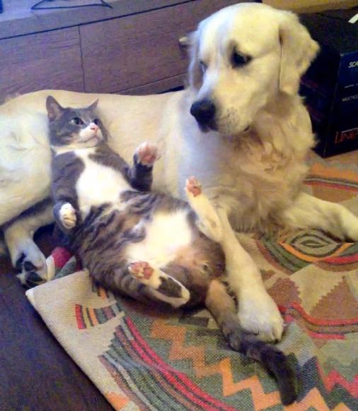 犬に気づかれた猫