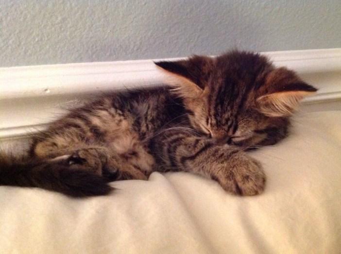 気持ち良さそうに眠る子猫