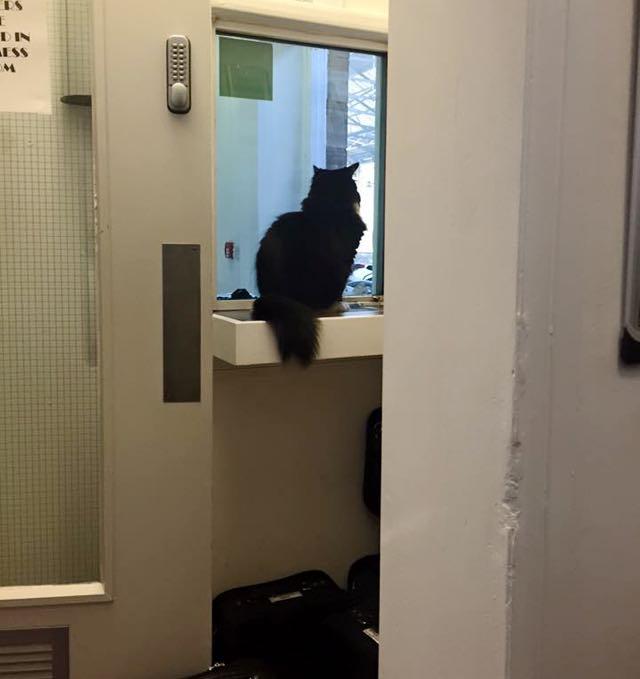 お客さんを待駅猫