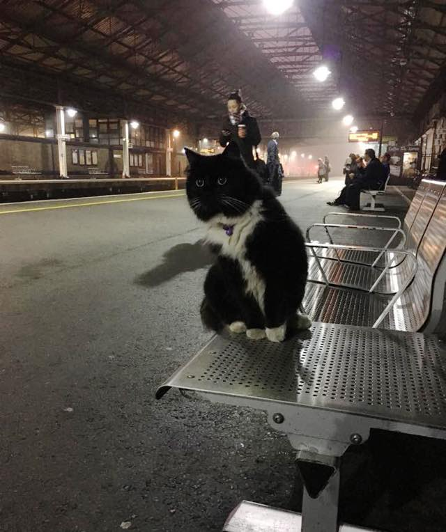 写真に納まる駅猫