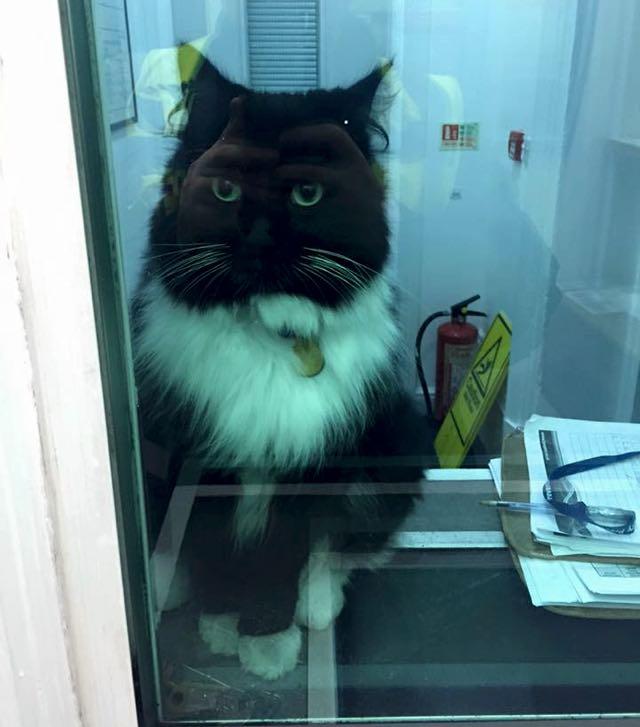 部屋の中の駅猫