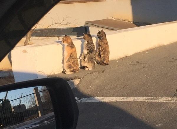 何かを見つめる3匹の猫