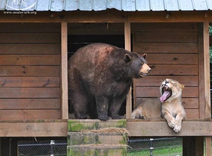 身体がまん丸なクマ