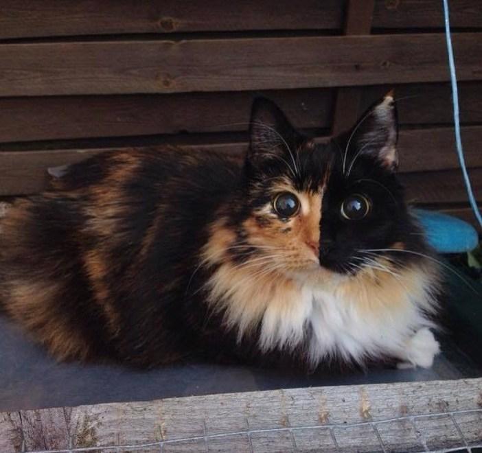 目がまん丸な猫