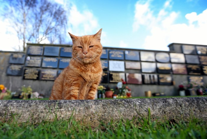 墓地に立つ猫