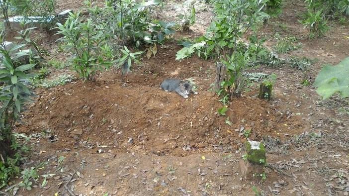 墓地に住み着いた猫