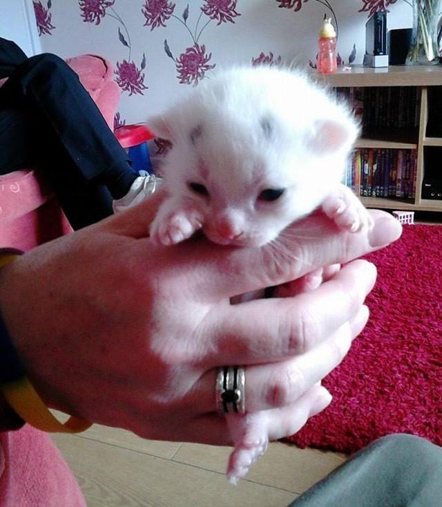 飼い主さんに持たれる困り顔の猫
