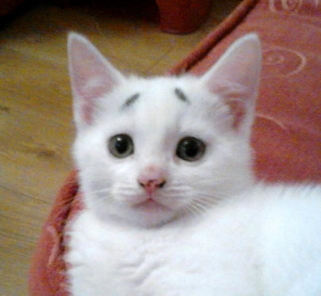 こちらを見つめる困り顔の猫
