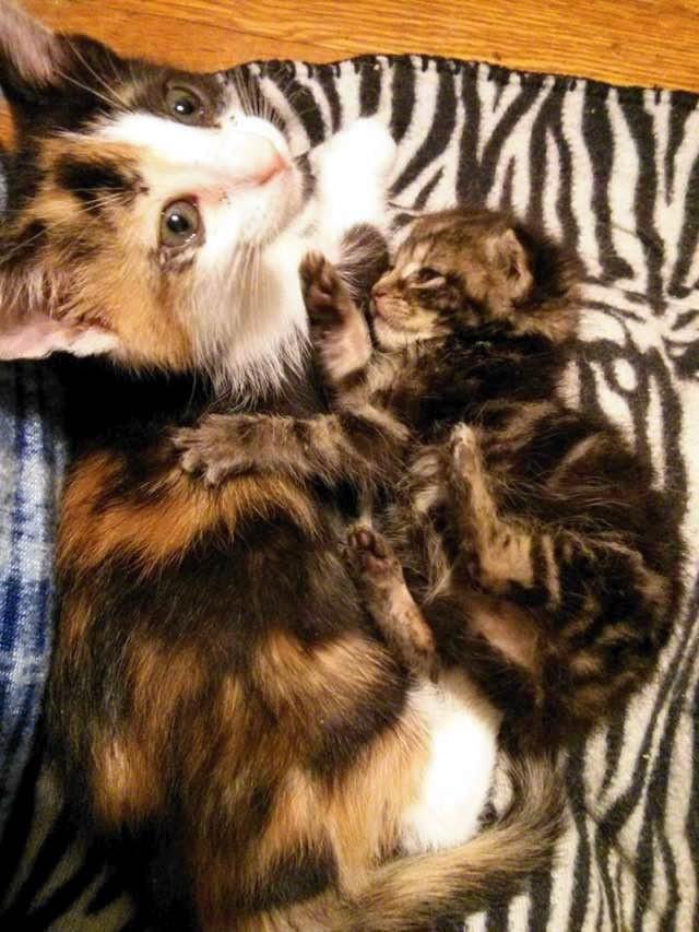 いっしょの二匹の子猫