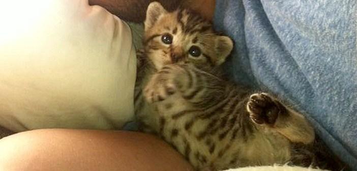 家の床下から発見された子猫