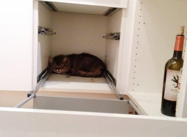 戸棚の中から出てこない猫