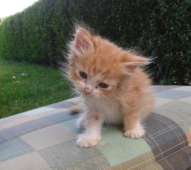 ちょっと元気になった子猫