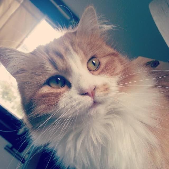 フサフサの猫に成長