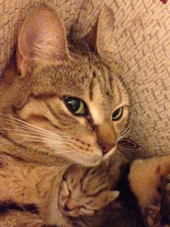 子猫を生んだ母猫
