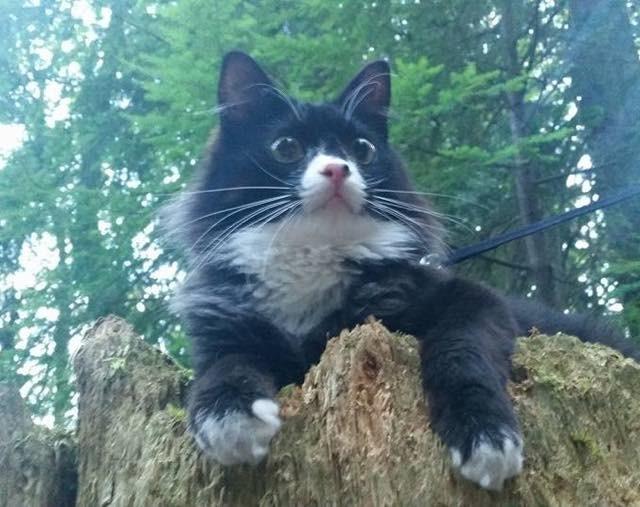 アウトドアな猫