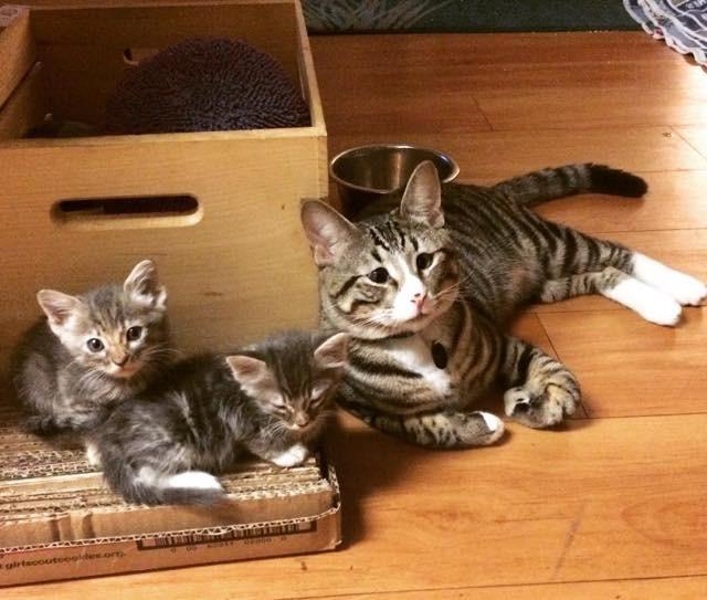 新しい子猫の親になる
