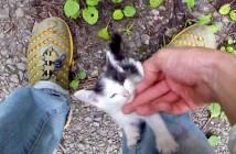 林道脇の子猫