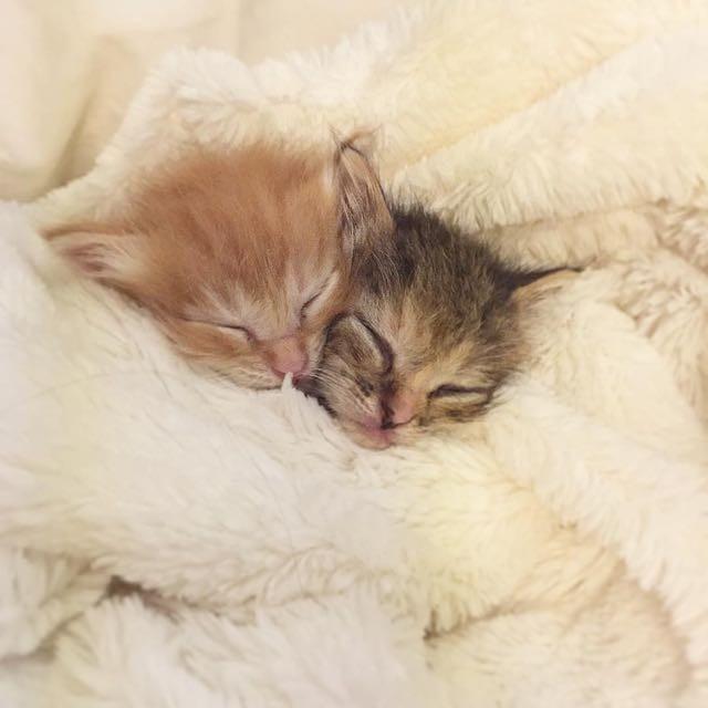 いっしょに眠る子猫
