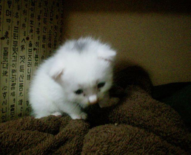 悲しそうな顔の子猫