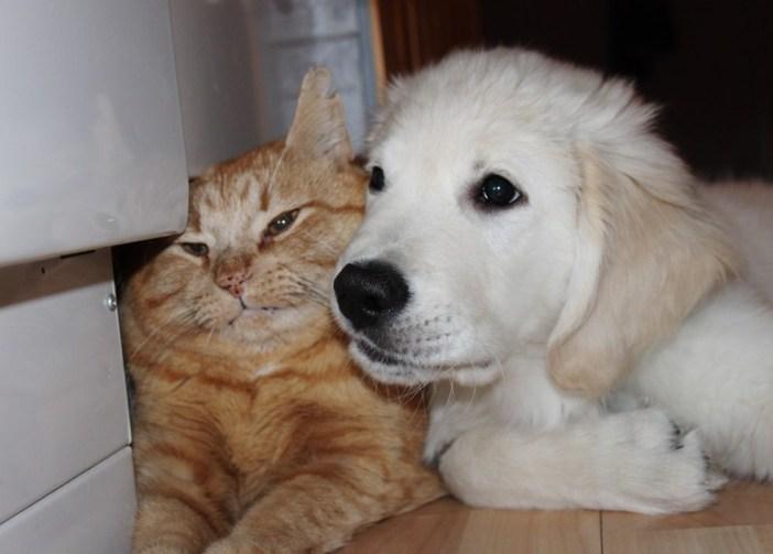 急接近する猫と犬