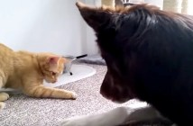 犬にご飯をあげる猫