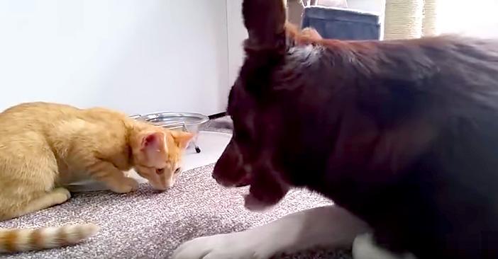 ご飯を食べさせる猫