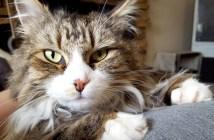 心を閉ざした猫が7ヶ月後