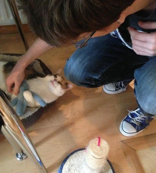 盲目の猫の世話をする男性