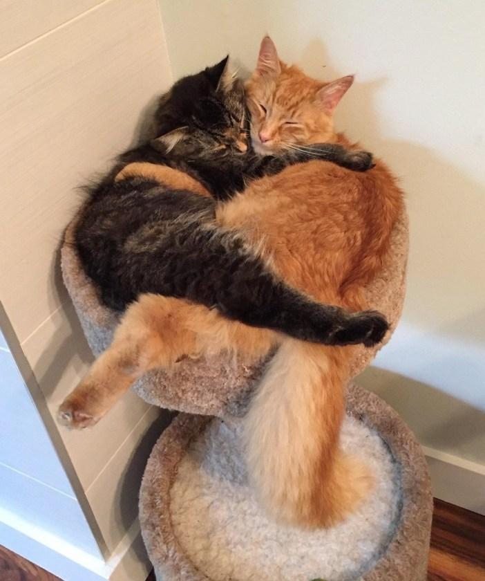 抱っこする二匹の猫
