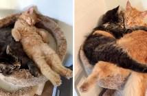 ベッドでいっしょに眠る二匹の猫