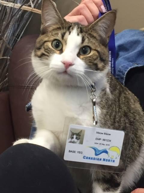 IDカードと猫