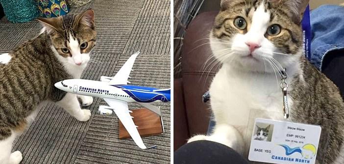 空港で働く猫