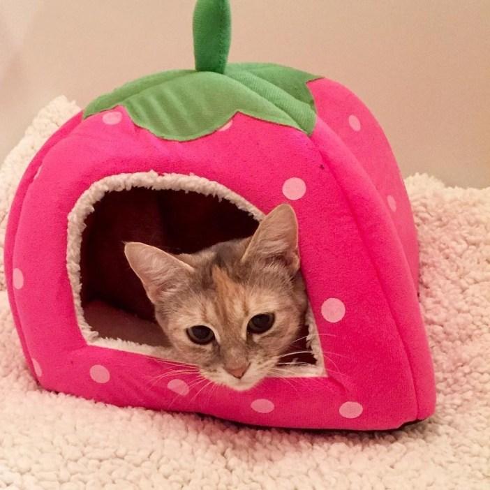 可愛い家と猫