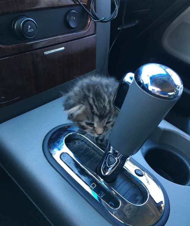 車の中の子猫