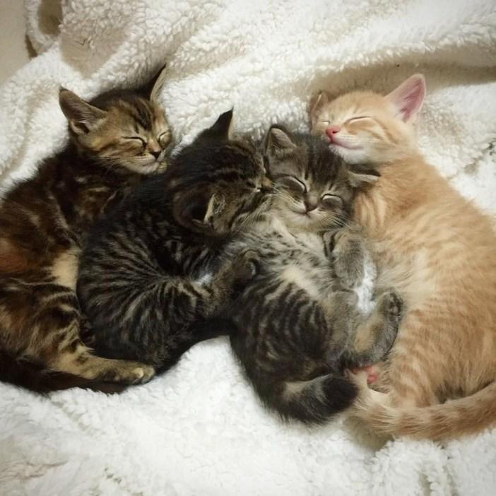 お昼寝中の子猫達
