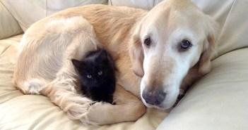 犬と猫は親友