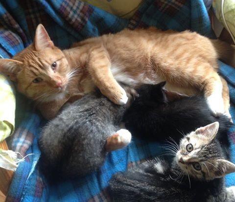 子猫は元気いっぱい