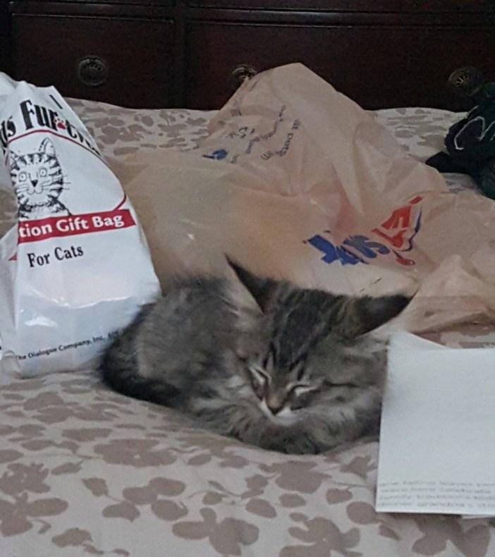 昼寝する子猫
