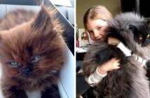 モフモフの猫に大変身