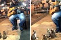 歌に聞き入る子猫たち