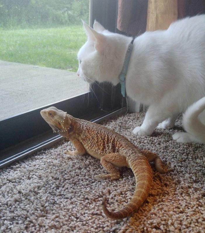 窓の外を見るトカゲと猫