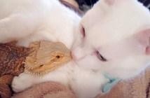 仲良しなトカゲと猫