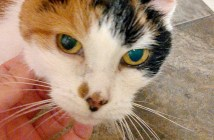 21歳の老猫