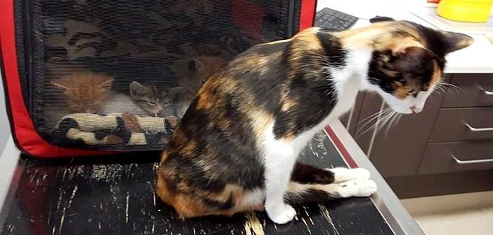 足が麻痺した母猫