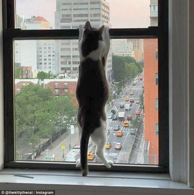窓に張り付いてる猫