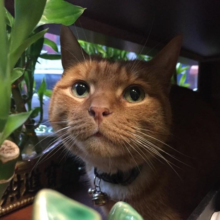 こっそり覗く猫